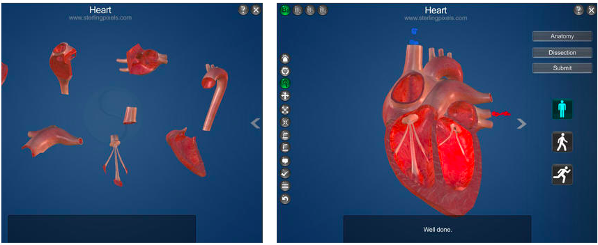 Screenshots of Structure of heart