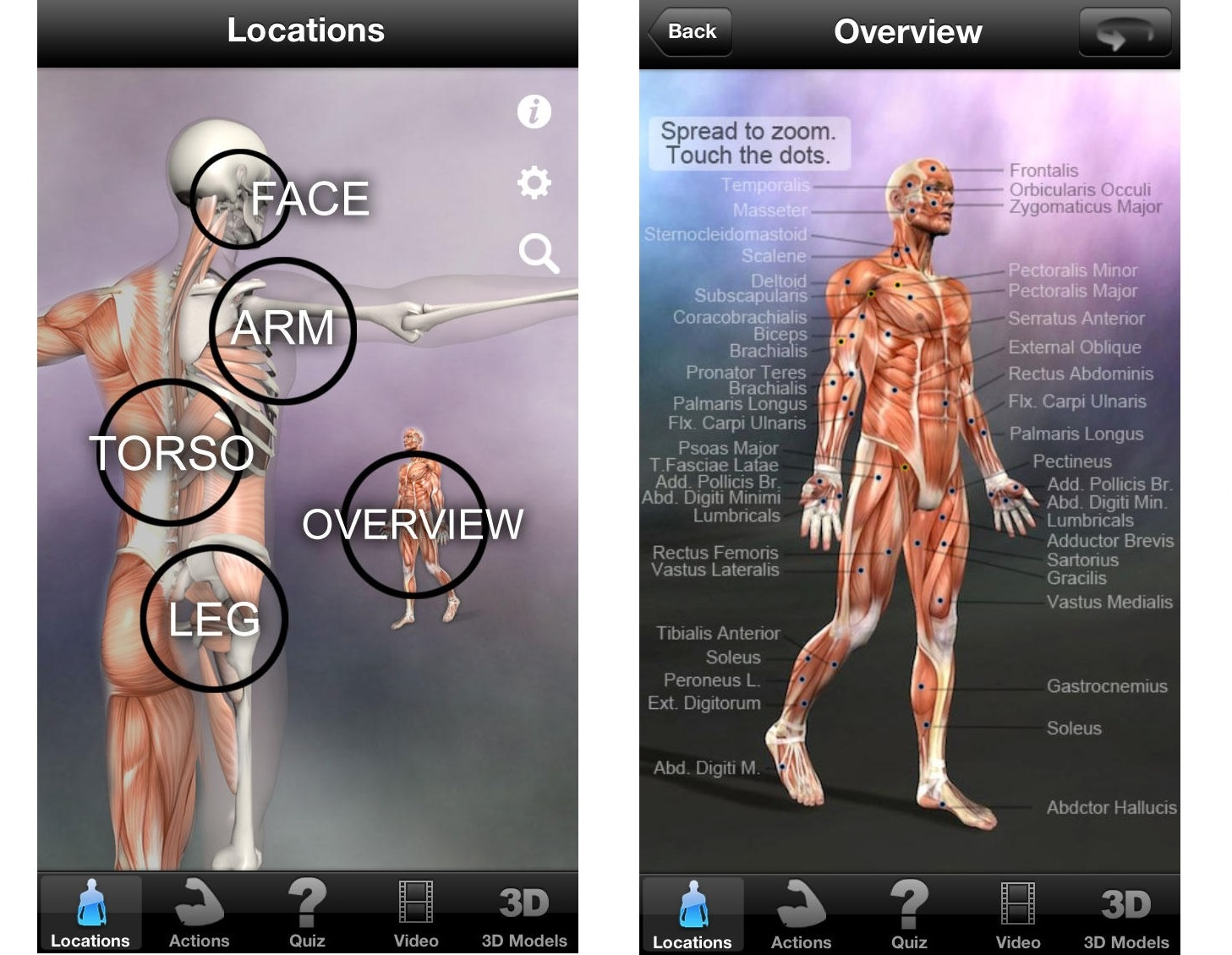 Learn Muscles Anatomy Quiz Reference Keepcatalog
